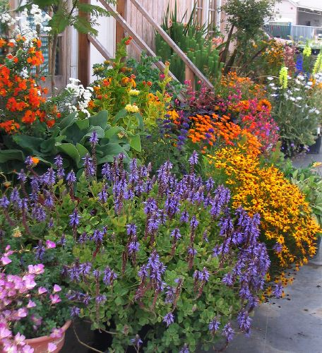 Container gardening is for everyone sunnyside gardens - Container gardening ...