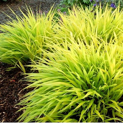 The diy landscaper part i sunnyside gardens for Low growing perennial grasses