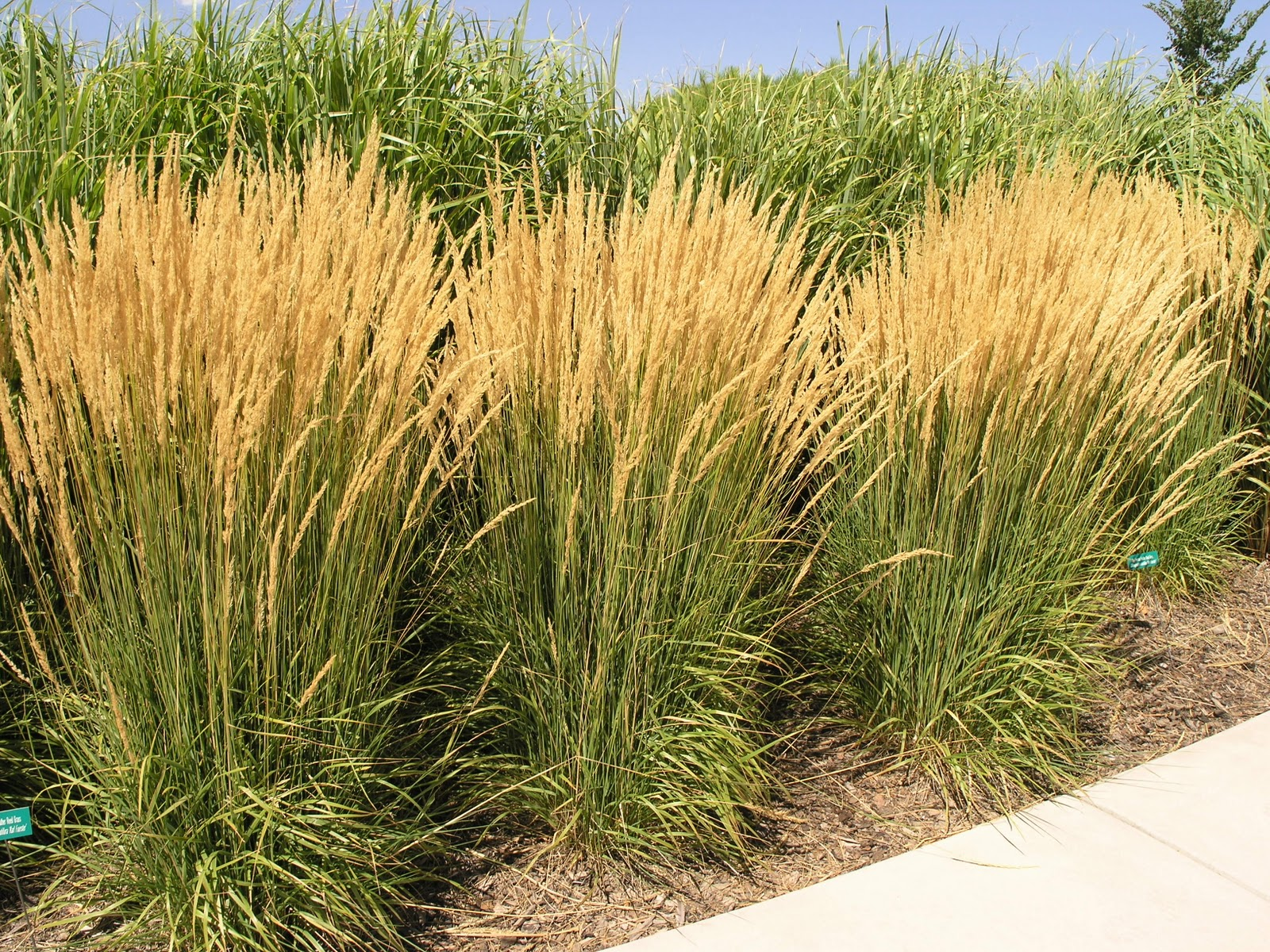 The diy landscaper part i sunnyside gardens for Full sun perennial grasses