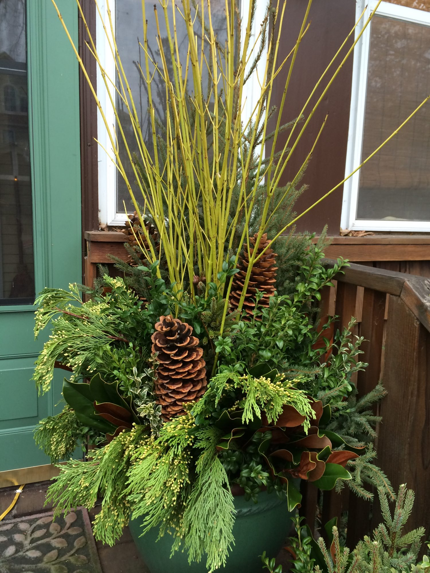 winter container with yellow dogwood