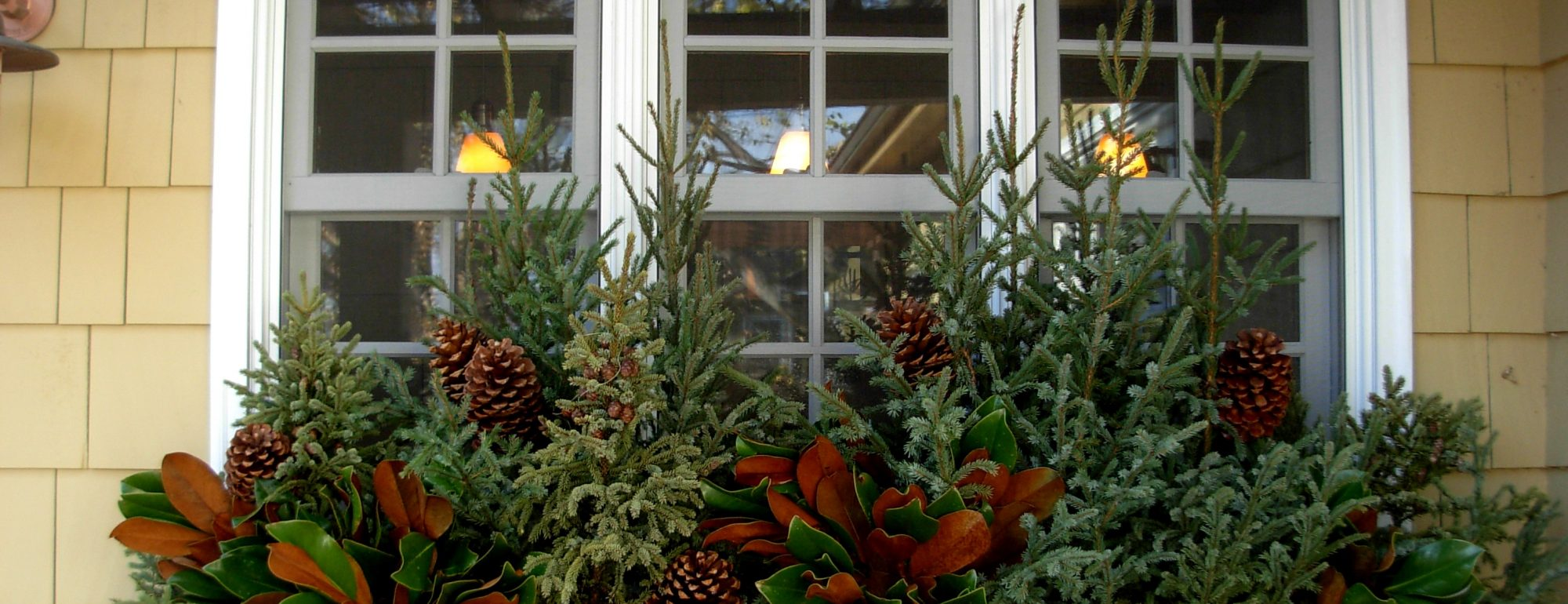 Winter Window Box with Spruce tips and magnolia