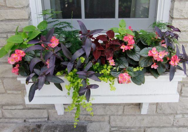 Window Box with summer annuals