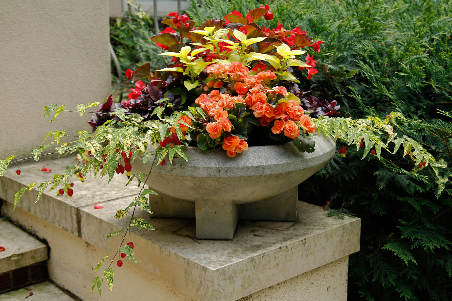 Annuals in Shallow Concrete Urn