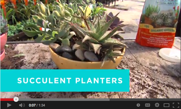 succulent planters video screenshot