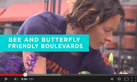 Bee & Butterfly Boulevard Beds Sunnyside Gardens