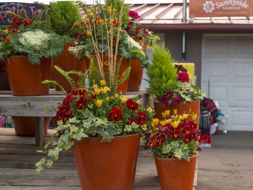Spring Custom Containers in Orange Pottery