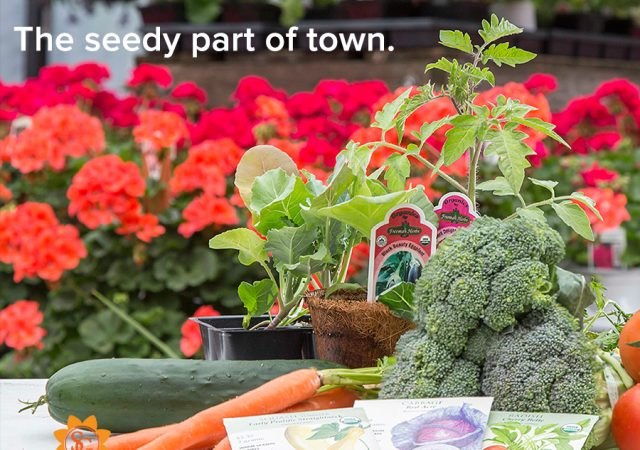 "Seeds and Vegetable display, text ""The seedy part of town."""