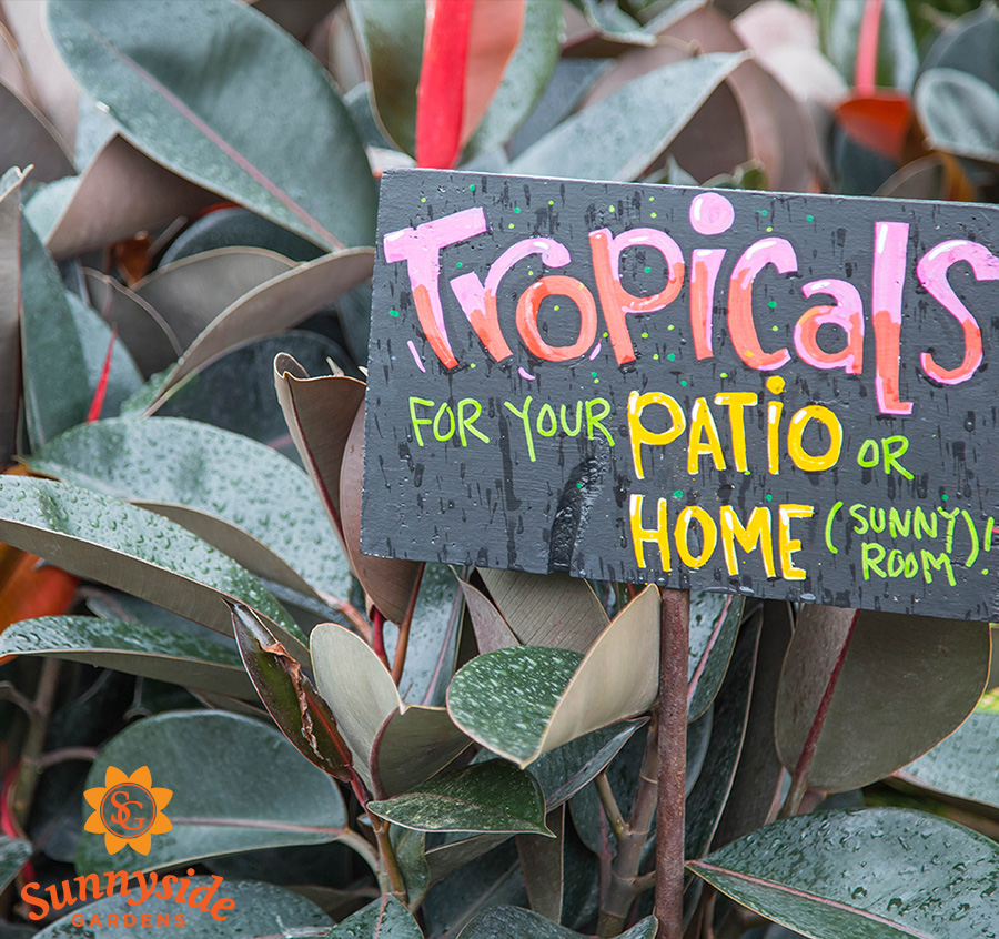 Tropicals sign with Burgundy Ficus