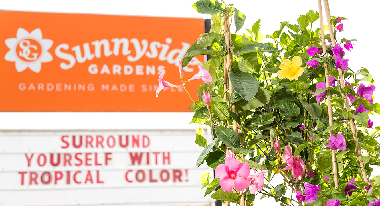 Blooming Tropicals in front of Sunnyside Sign