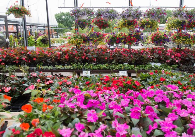 Annuals & Blooming Tropicals