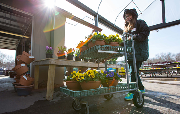 Cashier with Cart of Pansy Bowls