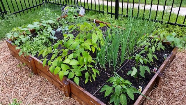 Square foot gardening maximum yield sunnyside gardens Garden club program ideas