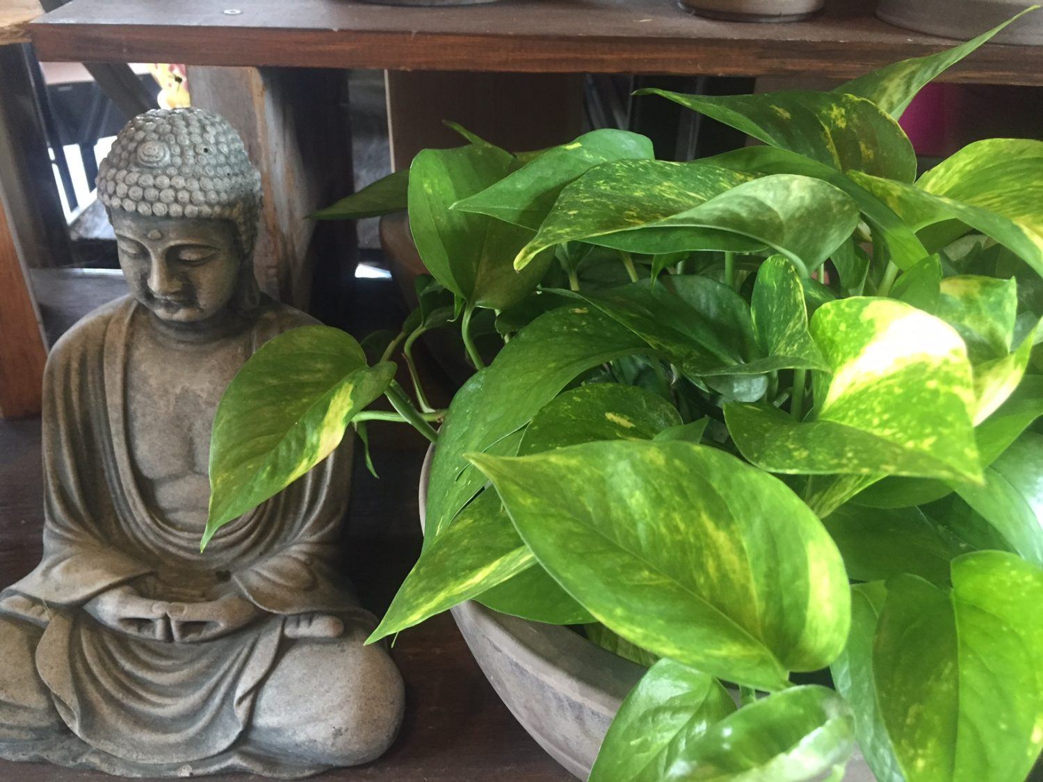 Pothos and Buddha Statue
