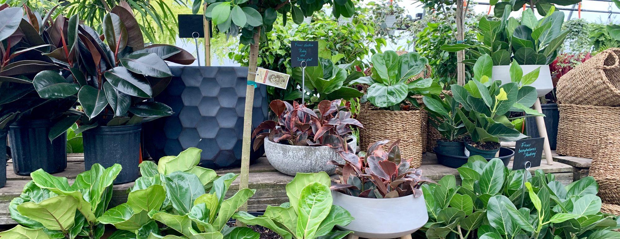 Houseplant image