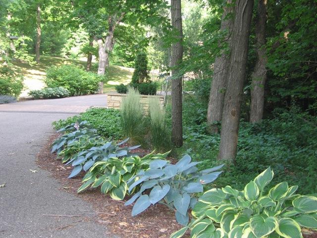 hosta garden walkway