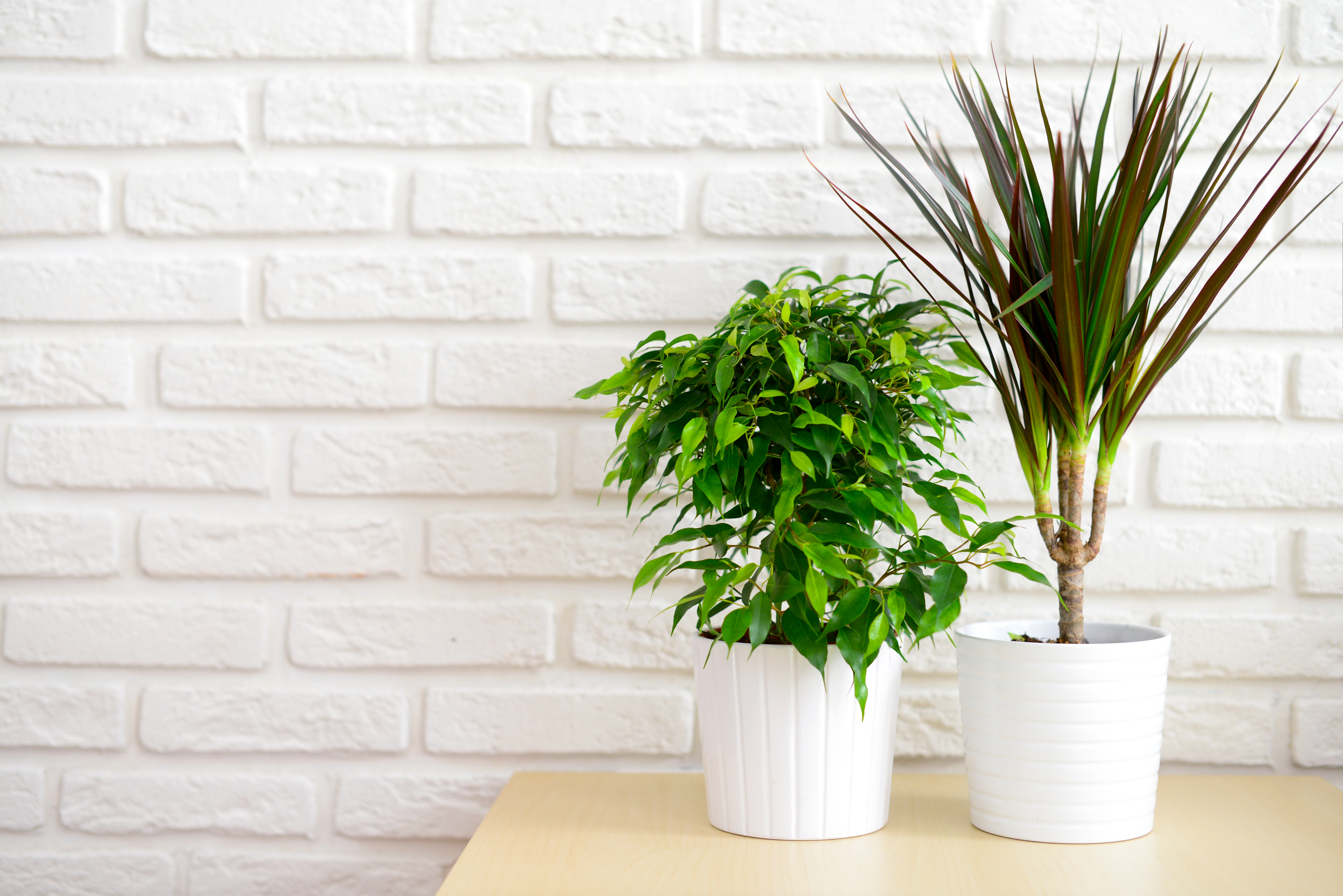 Houseplants In Pots On A Table At Brick Wall