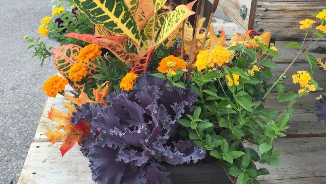 Fall Patio Pot with Croton Marigold Zinnia Kale