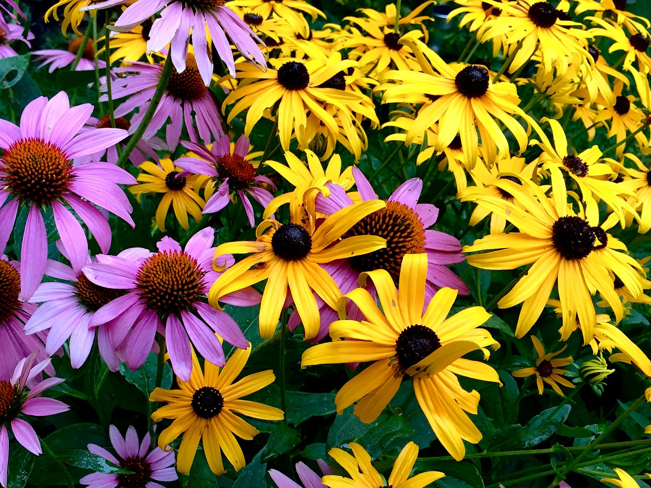 9 Perennials To Use To Start A Perennial Garden Sunnyside Gardens