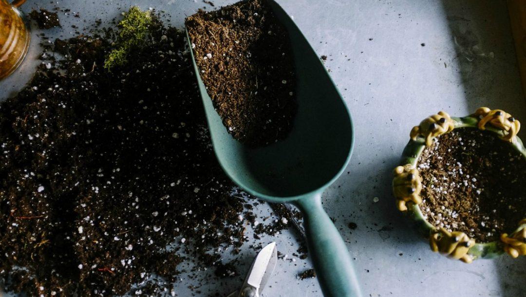 fertilizer for annual plants