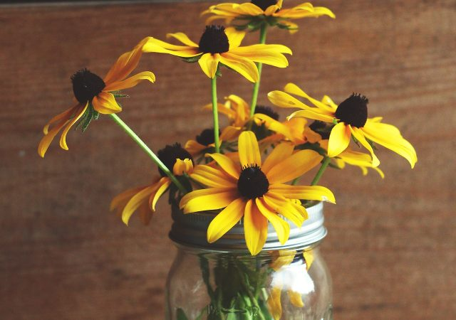Rudbeckia Black Eyed Susan in mason jar