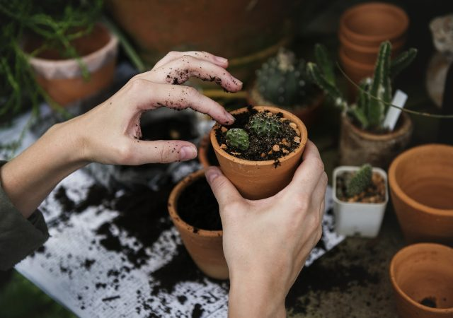 succulent potting