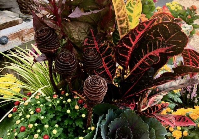 Fall Planter Kale Mum Croton