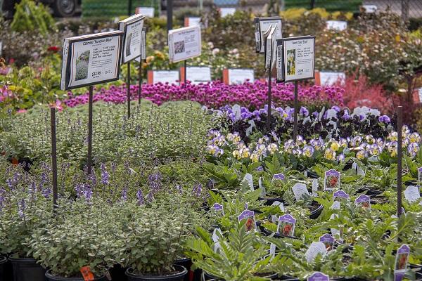 Spring Perennial Table