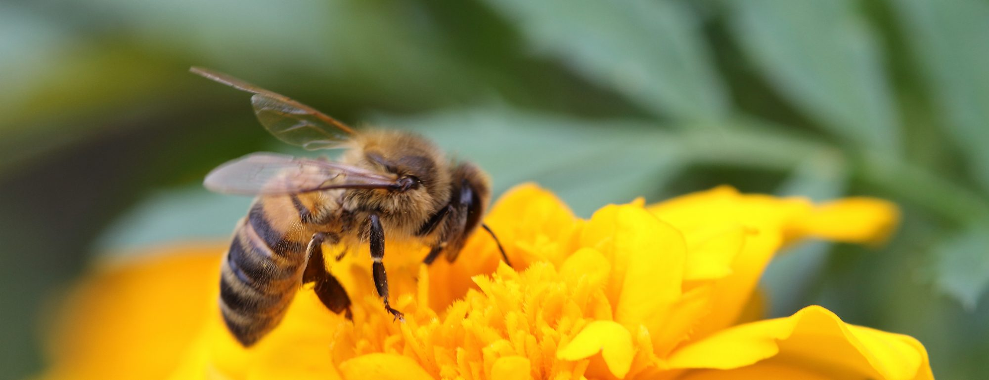 Pollinator Gardening & Perennial Gardening