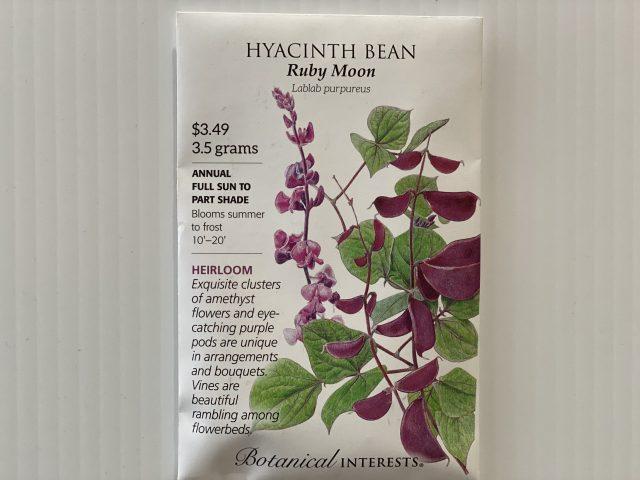 Hyacinth Bean Ruby Moon