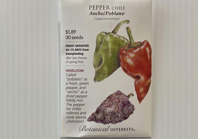 Pepper Chile Ancho/Poblano