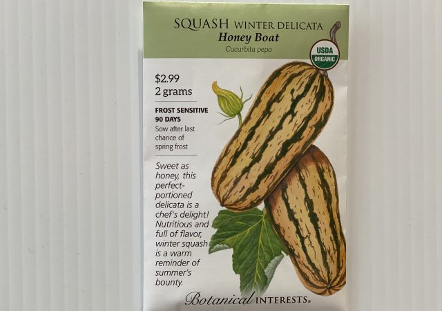 Squash Winter Delicata
