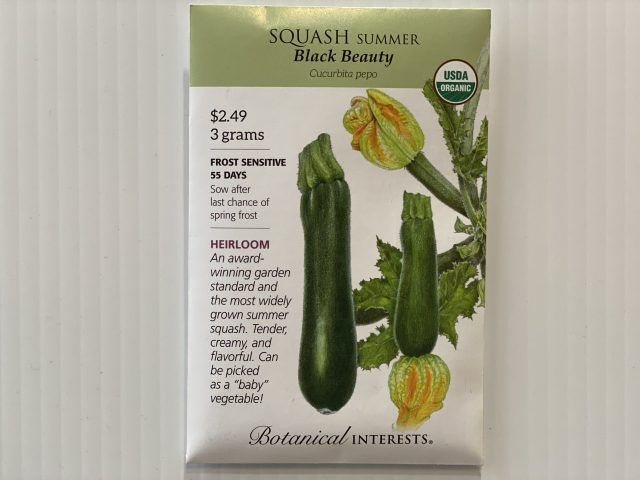 Squash Summer Black Beauty