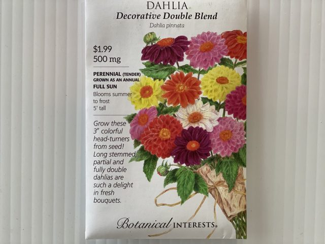 Dahlia Decorative Double Blend