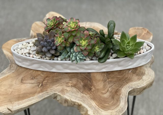 Succulent Mixed Centerpiece Arrangement