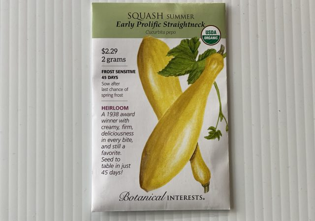 Squash Summer Early Prolific Straightneck
