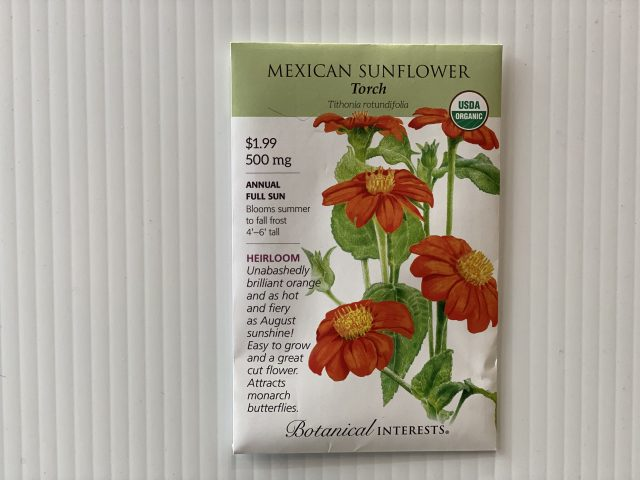 Mexican Sunflower Torch (Tithonia)