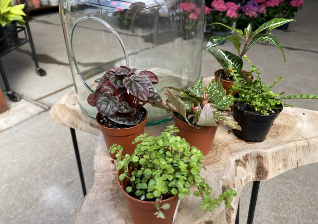 "Terrarium Plants 2"" (qty5)"