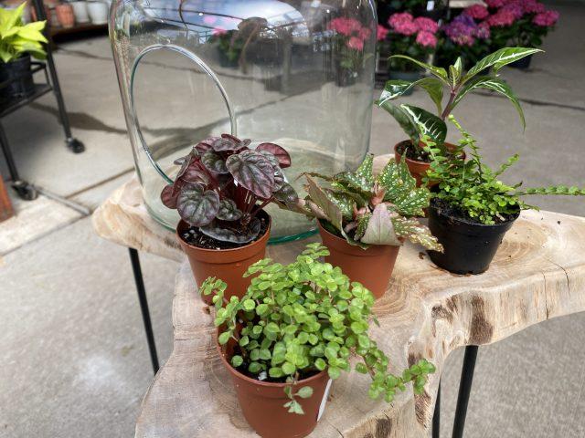 "Terrarium Plants 2"" (qty5)"