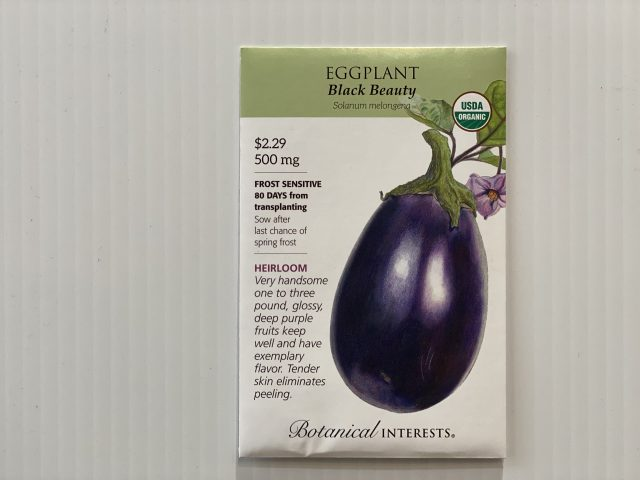 Eggplant Black Beauty