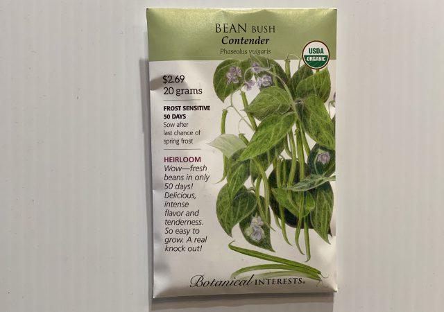 Bean Bush Contender