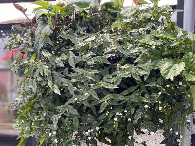 Mixed Foliage HB