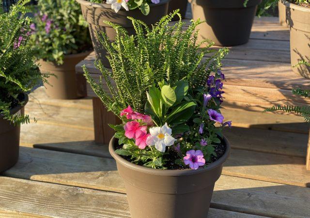 "Custom Planter 12"" Full Sun with Pink Vinca and KQ Fern"