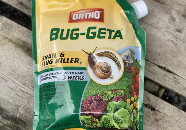 Bug-Geta
