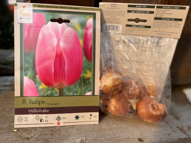 bulbs tulip milkshake