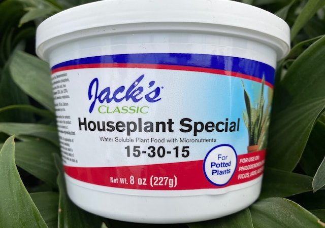jacks Houseplant Special
