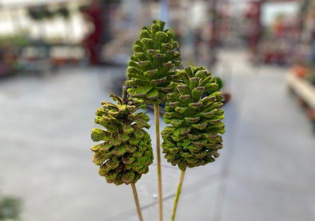 mossy pine cones