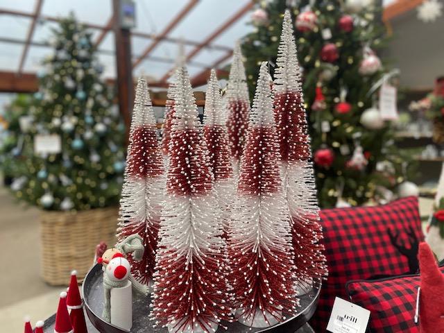 Trees bottle brush