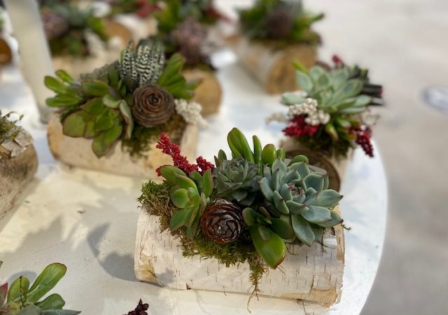 Custom succulent log
