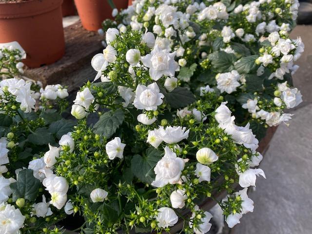 houseplant seasonal