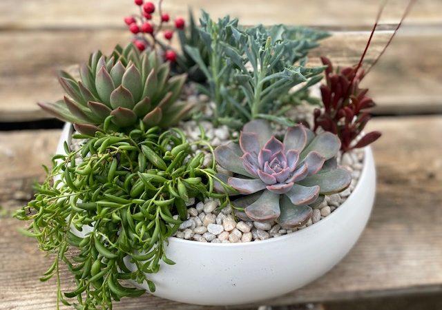 custom potted succulent